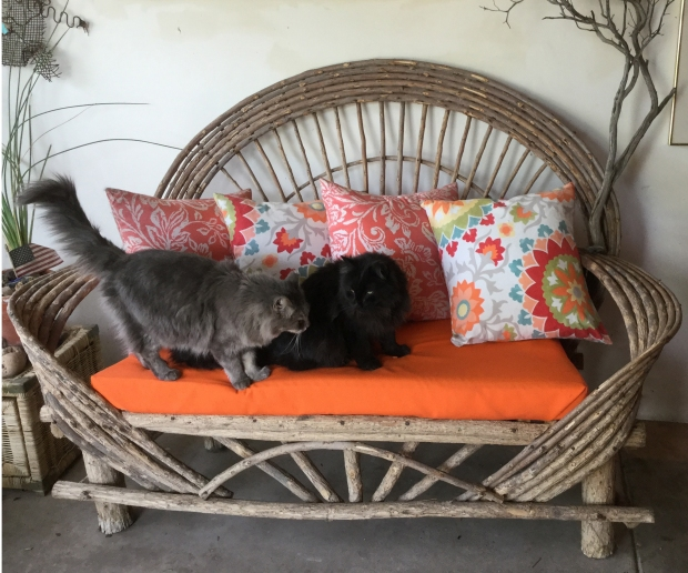 Porch couch with cats 2