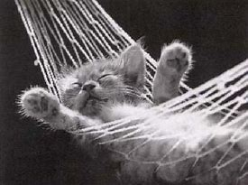 Kitty in a hammock