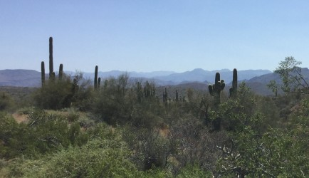 Sonoran Desert near Salt River
