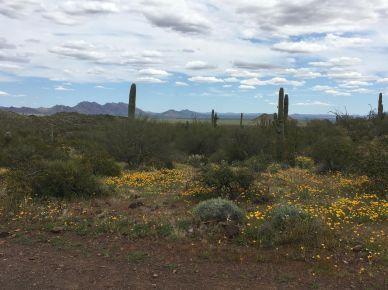 Desert Blooming 3
